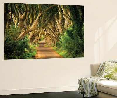 Tree Branch Road-Dennis Frates-Wall Mural