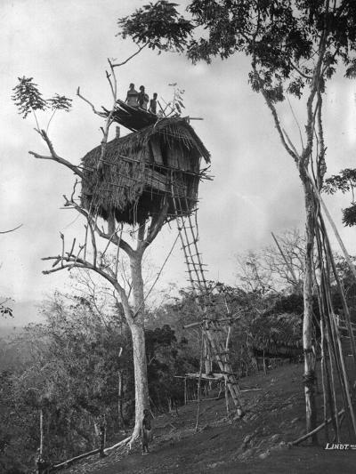 Tree Dwelling-Hulton Archive-Photographic Print