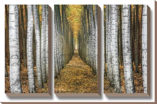 Tree Farm-Michael Cahill-Canvas Art Set