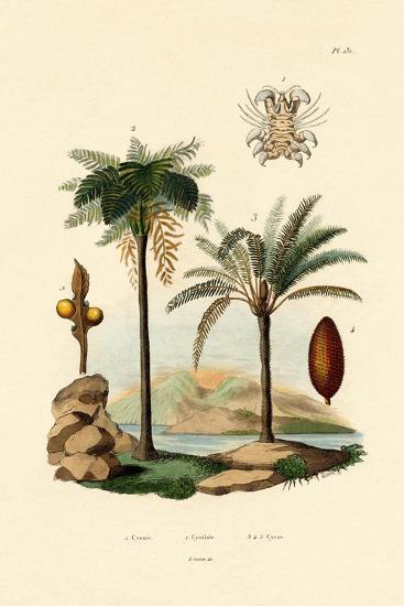 Tree Fern, 1833-39--Giclee Print