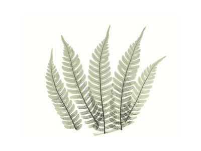 https://imgc.artprintimages.com/img/print/tree-fern-portrait-4_u-l-pyjy520.jpg?p=0
