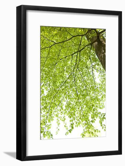 Tree, Forest, Leaves, Plants-Nora Frei-Framed Photographic Print
