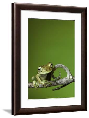 Tree Frog Golden Color Rainforest Amphibian On Branch Background Copy Space-kikkerdirk-Framed Photographic Print