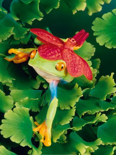 Tree Frog with Orchid-Gail Shumway-Art Print