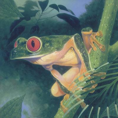 Tree Frog-Durwood Coffey-Giclee Print
