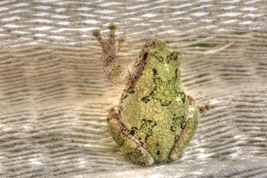 Tree Frog-Robert Goldwitz-Photographic Print
