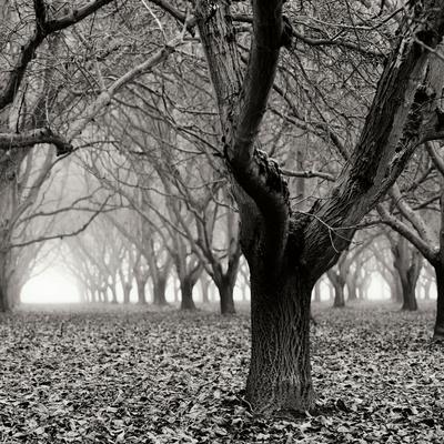 https://imgc.artprintimages.com/img/print/tree-grove-bw-sq-i_u-l-q11umm80.jpg?p=0