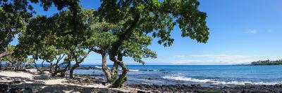 Tree Heliotrope on Beach, Kukio Bay, Kailua Kona, Hawaii, USA--Photographic Print