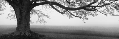 Tree in a Farm, Knox Farm State Park, East Aurora, New York State, USA--Photographic Print