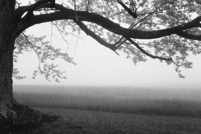 https://imgc.artprintimages.com/img/print/tree-in-a-farm-knox-farm-state-park-east-aurora-new-york-state-usa_u-l-q1beoy70.jpg?p=0