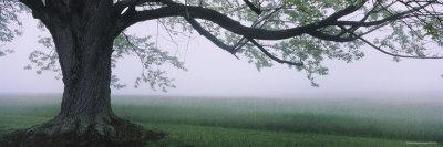 https://imgc.artprintimages.com/img/print/tree-in-a-farm-knox-farm-state-park-east-aurora-new-york-usa_u-l-p351et0.jpg?p=0