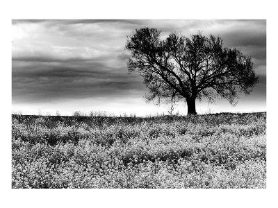 Tree in a Field, Severville, Tennessee--Art Print