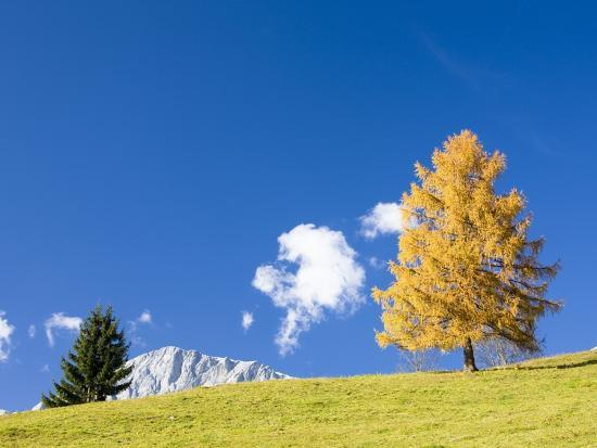 Tree in Alpine Meadow in Autumn-Frank Lukasseck-Photographic Print