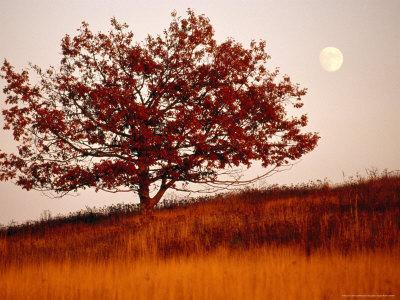 https://imgc.artprintimages.com/img/print/tree-in-autumn-foliage-on-a-grassy-hillside-with-moon-rising-over-all_u-l-p5v78d0.jpg?p=0