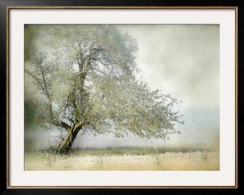 Tree In Field Of Flowers Framed Photographic Print By Mia