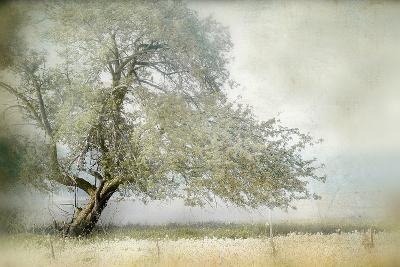 Tree in Field of Flowers-Mia Friedrich-Photographic Print
