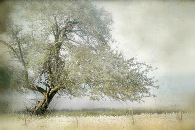 https://imgc.artprintimages.com/img/print/tree-in-field-of-flowers_u-l-q1ga36l0.jpg?artPerspective=n