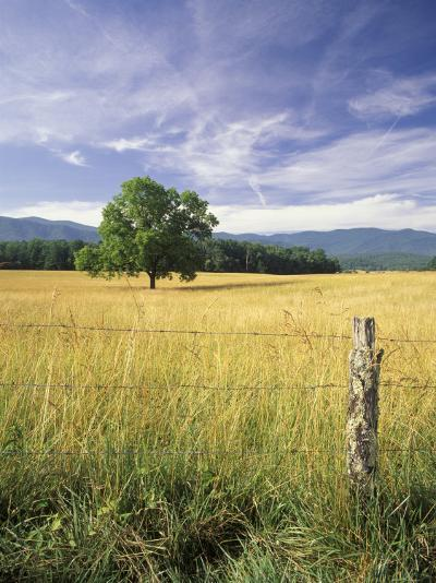 Tree in Grassy Field, Cades Cove, Great Smoky Mountains National Park, Tennessee, USA-Adam Jones-Photographic Print