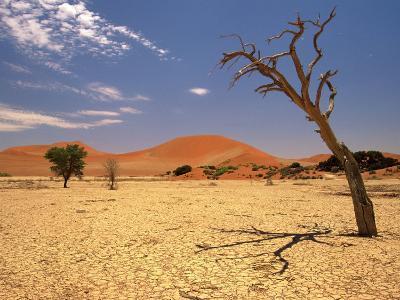 Tree in Namib Desert, Namibia-Walter Bibikow-Photographic Print