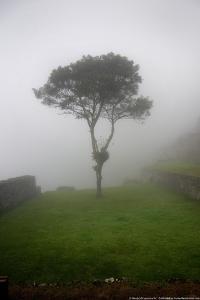 Tree in the Fog Machu Picchu Peru