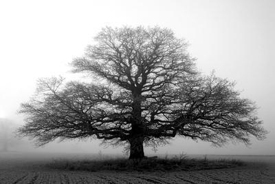 https://imgc.artprintimages.com/img/print/tree-in-the-mist_u-l-q10way50.jpg?p=0