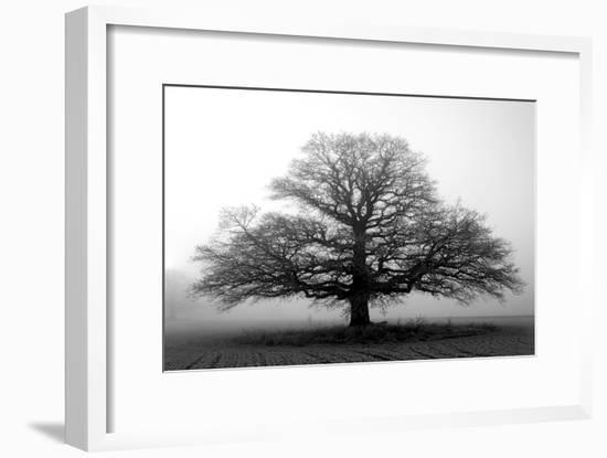 Tree in the Mist--Framed Photographic Print