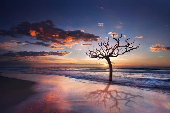 Tree in the Sea-Marco Carmassi-Photographic Print