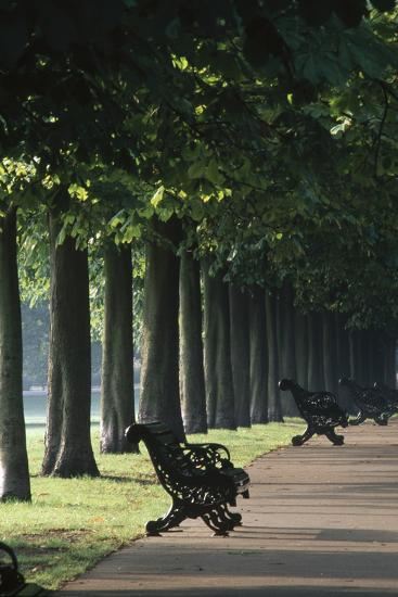 Tree Lined Avenue, Greenwich Park, London. Landscaped by Andre Le Notre for Charles Ii-Richard Turpin-Photographic Print