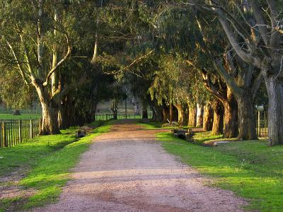 Tree Lined Country Road at Sunset, Montevideo, Uruguay-Per Karlsson-Photographic Print