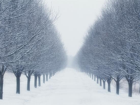 Tree-lined Road in Winter-Robert Llewellyn-Photographic Print