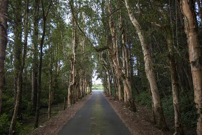 Tree-Lined Road to Alexandria Falls Lookout-Gabby Salazar-Photographic Print
