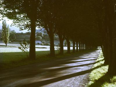 Tree Lined Roadway Somewhere in Provence-Gjon Mili-Photographic Print