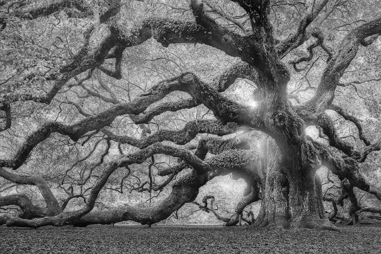Tree of Light BW FL-Moises Levy-Photographic Print