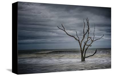 Tree on Botany Bay-Robert Lott-Stretched Canvas Print