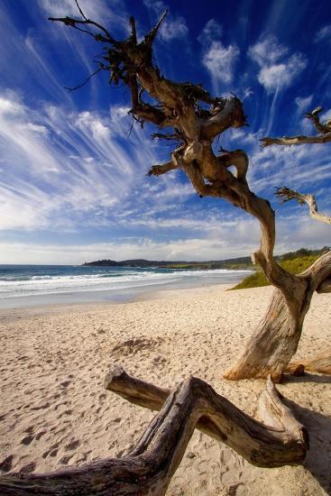 Tree on Carmel Beach, California-George Oze-Photographic Print