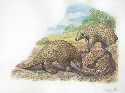 Tree Pangolins Manis Tricuspis Catching Ants--Giclee Print