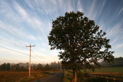 Tree Pole Road Sky-Robert Goldwitz-Photographic Print