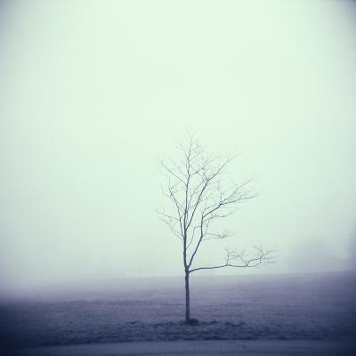 Tree Portrait, Discovery Park-Kevin Cruff-Photographic Print