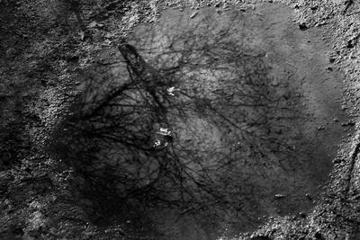 https://imgc.artprintimages.com/img/print/tree-reflection-in-puddle_u-l-q10wln40.jpg?p=0