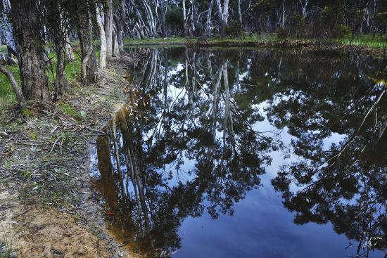 Tree Reflections, Grampians National Park, Australia-Keith Ladzinski-Photographic Print