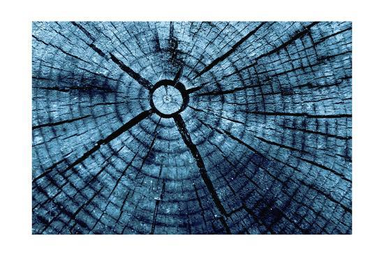 Tree Rings 2-GI ArtLab-Premium Giclee Print