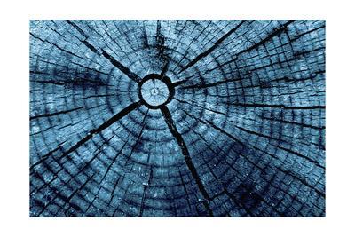 https://imgc.artprintimages.com/img/print/tree-rings-2_u-l-pt821r0.jpg?p=0