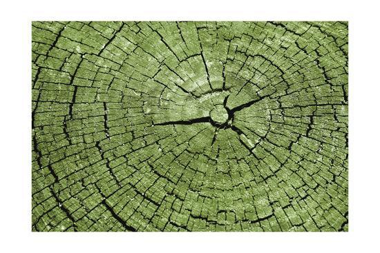 Tree Rings 4-GI ArtLab-Premium Giclee Print