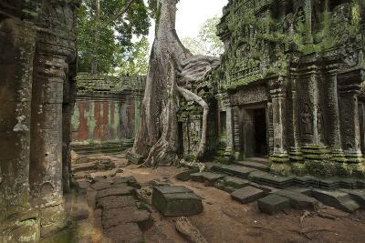 Tree Roots Encase a Ruin in Ta Prohm, a Temple Near Angkor Wat-Scott S^ Warren-Photographic Print