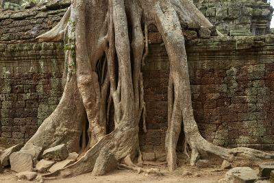 Tree Roots Growing over Ta Prohm Temple Ruins, Angkor World Heritage Site, Siem Reap, Cambodia-David Wall-Photographic Print