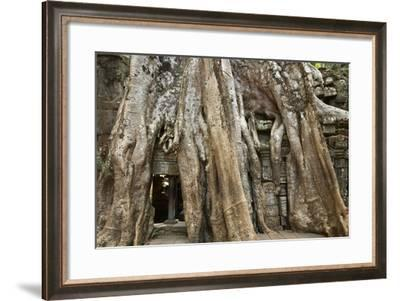 Tree Roots Growing over Ta Prohm Temple Ruins, Angkor World Heritage Site, Siem Reap, Cambodia-David Wall-Framed Photographic Print
