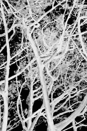 Tree Scatter-Karyn Millet-Photographic Print