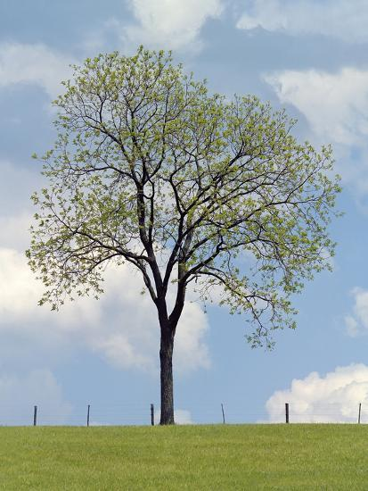Tree Seasons I-Bill Coleman-Giclee Print