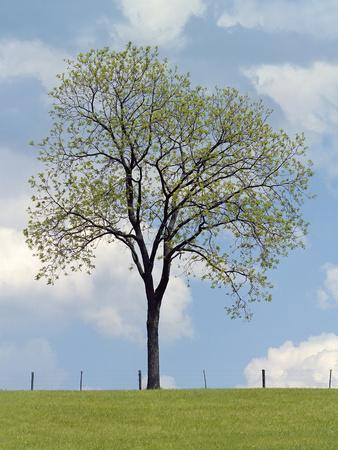 https://imgc.artprintimages.com/img/print/tree-seasons-i_u-l-f6cjs40.jpg?p=0