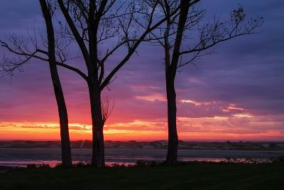 Tree Silhouettes at Sunrise, Maine Coast-Vincent James-Photographic Print